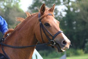 Horse Bridles Which is best Bitless or bited