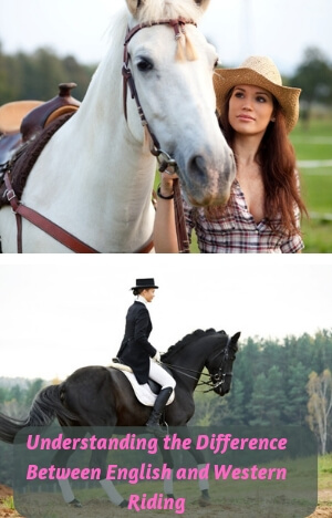 Difference Between English and Western Riding